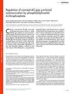 Regulation of connexin43 gap junctional communication by ...