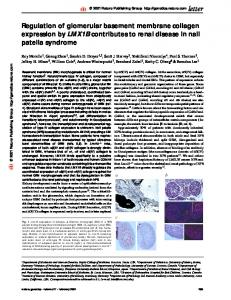 Regulation of glomerular basement membrane collagen expression ...