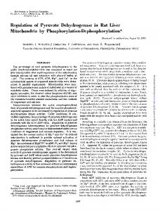 Regulation of Pyruvate Dehydrogenase in Rat Liver Mitochondria by ...