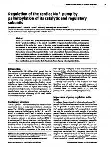 Regulation of the cardiac Na pump by