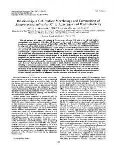 Relationship of CellSurface Morphology and Composition of ...