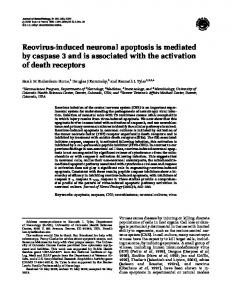 Reovirus-induced neuronal apoptosis is mediated by ... - Springer Link