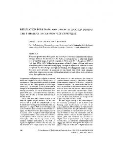 replication fork rate and origin activation during the s ... - BioMedSearch