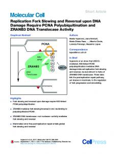 Replication Fork Slowing and Reversal upon DNA Damage Require ...