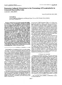 Reserpine-induced Alterations in the Processing of Proenkephalin in ...