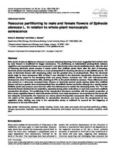 Resource partitioning to male and female flowers of Spinacia oleracea