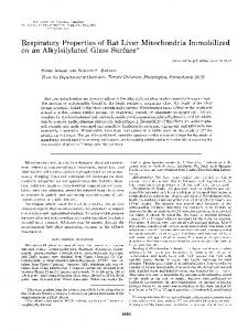Respiratory Properties of Rat Liver Mitochondria Immobilized on an ...