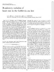 Respiratory variation of heart rate in the California sea lion