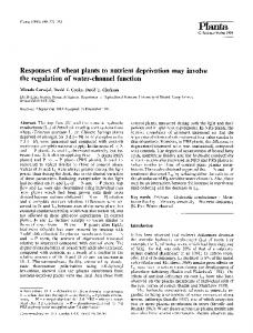 Responses of wheat plants to nutrient deprivation may ... - Springer Link