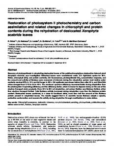 Restoration of photosystem II photochemistry and carbon assimilation ...