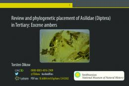 Review and phylogenetic placement of Asilidae ...