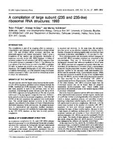 ribosomal RNA structures: 1993 - Europe PMC