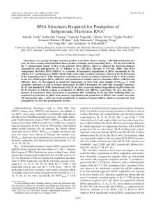 RNA Structures Required for Production of ... - Journal of Virology