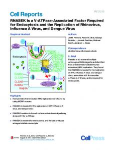 RNASEK Is a V-ATPase-Associated Factor Required for Endocytosis ...