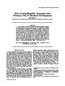 Role of Intraflagellar Transport and Primary Cilia ... - Wiley Online Library