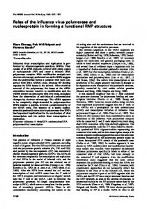 Roles of the influenza virus polymerase and nucleoprotein in ... - NCBI