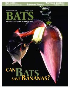save bananas? - Bat Conservation International
