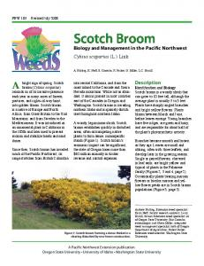 Scotch Broom - OSU Extension Catalog - Oregon State University