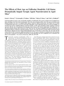 Scrapie Agent Neuroinvasion in Aged Mice Dendritic Cell Status ...