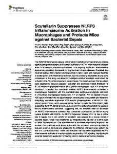 Scutellarin Suppresses NLRP3 Inflammasome