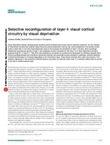 Selective reconfiguration of layer 4 visual cortical circuitry by visual ...