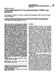 Serine-phosphorylated STAT1 is a prosurvival factor in Wilms' tumor ...