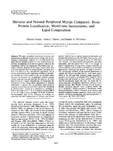 Shiverer and Normal Peripheral Myelin Compared: Basic Protein