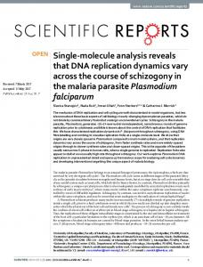 Single-molecule analysis reveals that DNA replication ... - CyberLeninka