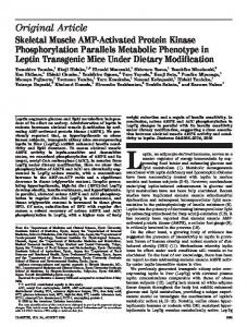 Skeletal Muscle AMP-Activated Protein Kinase Phosphorylation ...