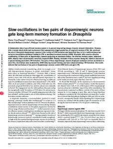 Slow oscillations in two pairs of dopaminergic neurons gate ... - Nature