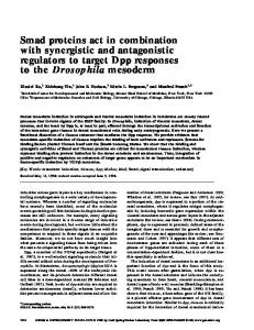 Smad proteins act in combination with synergistic and antagonistic ...