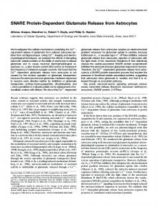 SNARE Protein-Dependent Glutamate Release