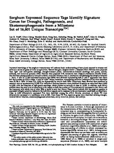 Sorghum Expressed Sequence Tags Identify ... - Plant Physiology