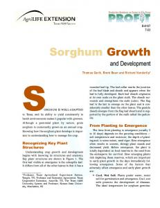 Sorghum Growth and Development