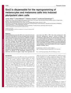 Sox2 is dispensable for the reprogramming of melanocytes and ...