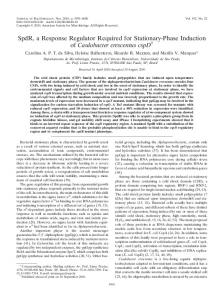 SpdR, a Response Regulator Required for Stationary-Phase Induction ...