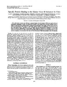 Specific Protein Binding to the Simian Virus 40 ... - Europe PMC