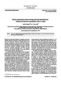 Spine maturation and pruning during development: Cadherin/Catenin ...