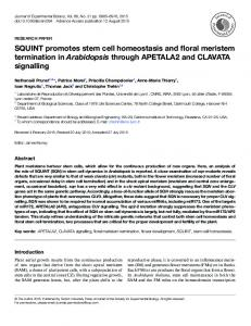 SQUINT promotes stem cell homeostasis and floral ... - Oxford Journals