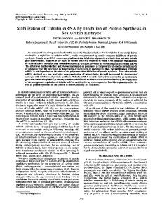Stabilization of Tubulin mRNA by Inhibition of Protein Synthesis in