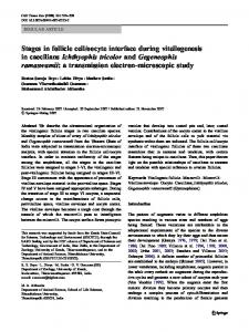 Stages in follicle cell/oocyte interface during vitellogenesis in ...
