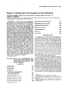 Stages of embryonic development of the zebrafish - Wiley Online Library