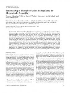 Stathmin/Op18 Phosphorylation Is Regulated by Microtubule Assembly