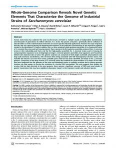 Strains of Saccharomyces cerevisiae