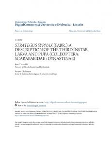 strategus syphax (fabr.):a description of the third instar larva and pupa ...