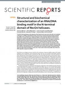 Structural and biochemical characterization of an