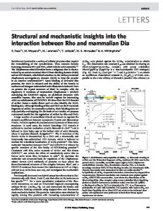 Structural and mechanistic insights into the interaction between Rho ...