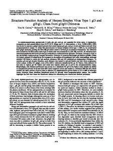 Structure-Function Analysis of Herpes Simplex ... - Journal of Virology