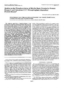 Studies on the Phosphorylation of Myelin Basic Protein by Protein ...