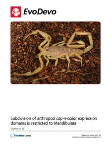 Subdivision of arthropod cap-n-collar expression ... - Extavour Lab